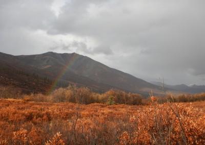Yukon-Moose-Pics-070
