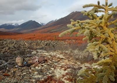 Yukon-Moose-Pics-086