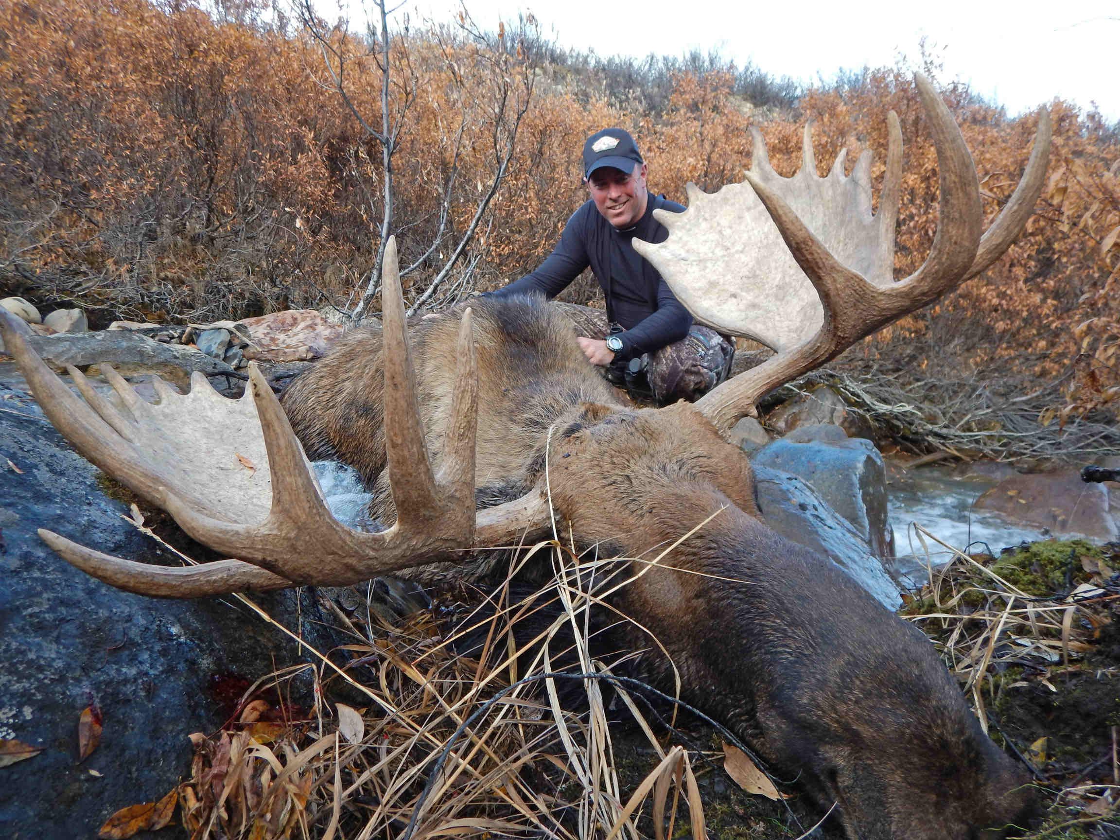 Yukon-Moose-Pics-102